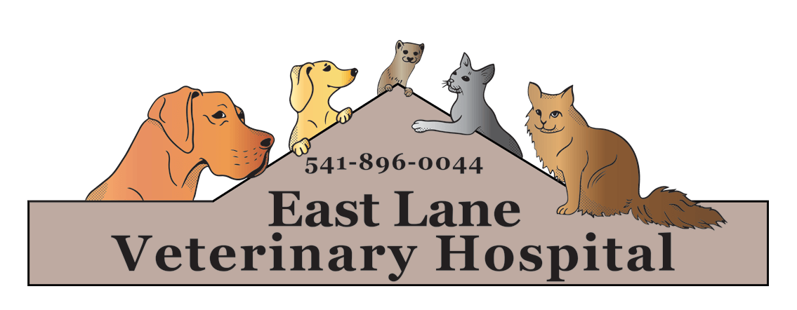 East Lane Veterinary Hospital